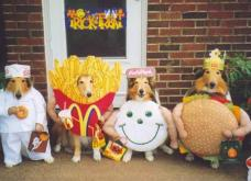 funny-pets-halloween-costumes-dogs-dressed-up-in-fast-food-outfits